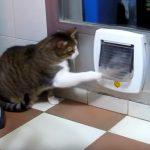 家に入りたい猫と、入らせない猫