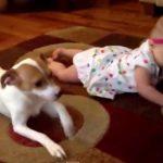 赤ちゃんにハイハイを教えるワンちゃん先生