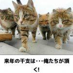 猫の画像でボケて!? 傑作選その4 干支になりたい猫さん