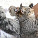 【お昼寝】ハンモックで背中合わせに寝る二匹の猫ちゃん