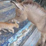 お互い大好きな子猫ちゃんとロバ