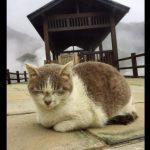 温泉の周りが暖かすぎて、まったりする猫ちゃん【猫画像】