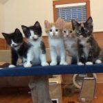 5匹の子猫が踊りだす!?