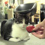 ネコにイチゴをあげたら、強烈なパンチが返ってきた