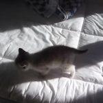 自分の影と戦う子ネコちゃん