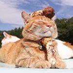 秋と言えば「松茸」、「松茸」といえば「ニャンコ」