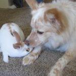 ワンちゃんとウサギさんのチュ~♪