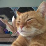 飼い主さんがヨガの撮影中、見事に映り込む茶トラ猫さん