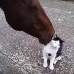 お馬さんに毛づくろいをしてもらい、うれしそうな猫さん