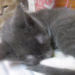 弟のイビキがうるさくて、寝られなくて困る兄猫さん