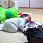 赤ちゃんに尻尾をつかまれても、モフモフされても、優しくあやす猫ちゃん