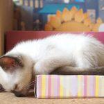 ウトウトする猫ちゃん、顔が床に・・・(^◇^)