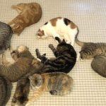 [平和] くっつきあって寝るネコちゃん達