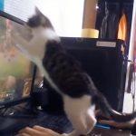 ゲームをする飼い主さんと、とことん邪魔をするネコちゃん