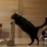 [先生] 赤ちゃんに歩き方(二足歩行)を教える猫
