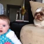赤ちゃんが泣き出すと、カワイク声をかけて泣き止ませる犬