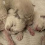 [感動] 5匹の子ネコが生まれてから50日間を記録したムービー