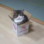 小さい箱が大好きなネコ [容量オーバー]