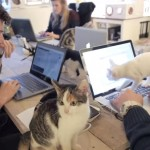 出社するとネコちゃんがお出迎え♪猫だらけのオフィスが天国♡