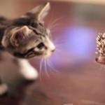 ハリネズミと出会ったネコ