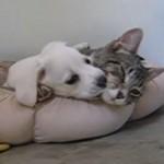 イヌとネコが抱き合ってイチャイチャしてたらケンカになった♪