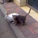 ネコちゃんにベッタリなうさぎちゃん