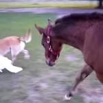 ワンコと子馬のジャレ合いが楽しそうで可愛い♪