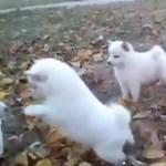 柴犬がとにかく出てくる動画集