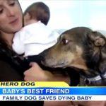 赤ちゃんを危機を察知し、飼い主へ報告して生命を救ったヒーロー犬のデューク