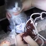 深い穴に落ちてしまった子猫の救出劇