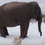 象さんと一緒に散歩する子犬♡