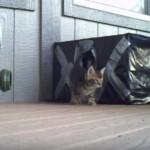 「朝だニャン♪」次から次へと箱から出てくる猫ちゃんたち