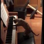 優雅にピアノを弾くネコちゃん