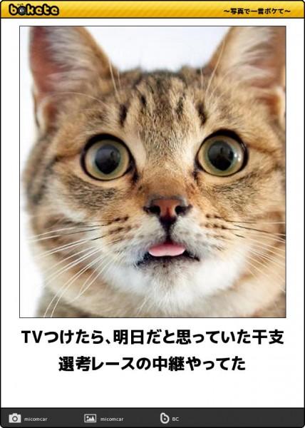 地震ネコ━━━━(=`ェ´=)━━━━!!! ★XXX YouTube動画>79本 ->画像>440枚