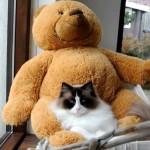 テディベアと一緒にハンモックにのってくつろぐネコさん