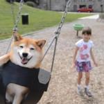 7才の少女と遊ぶ柴犬がとっても楽しそう♪