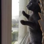 初めて雪をみたネコちゃんの反応が可愛い♪