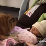 お家に2日目の赤ちゃんがやってきた!はしゃぎながら、赤ちゃんと対面するワンちゃん