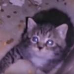 廃墟となった病院から猫の鳴き声が・・・迷い込んだ子猫の救出劇