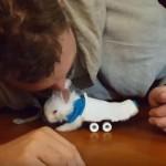 後ろ脚が麻痺してしまった小さなウサギさん、スケボーのような車いすで動けるように