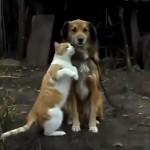 ハグしたり、スリスリしたり仲良しな犬猫カップル