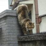 【画像】 愛の為なら、トゲトゲの道もずんずん進むネコさん♪