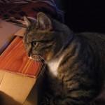 一緒に暮らしていた家族が天国へ旅立ってしまった、残された猫ちゃんの前に遺灰を出すと・・・