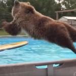プールに何度も飛び込みをするクマさん♪