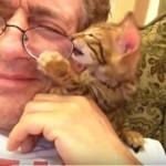 メガネが欲しい子猫ちゃんの頑張り