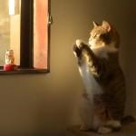 招き猫 vs リアル招き猫 勝つのはどっち?