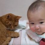 睡眠の邪魔をされても優しく赤ちゃんの相手をしてあげる猫ちゃん♪