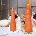 にんじんをのせる猫達