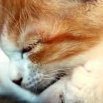 子猫が寝ている姿をアップでお楽しみ下さい