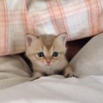 こんにちは、子猫ちゃん♪